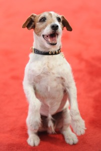 Uggie the dog. (Getty Images)