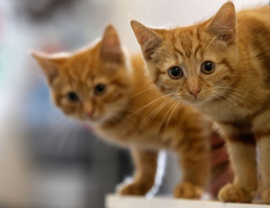 Kittens who weren't murdered by the 12-year-old in question.