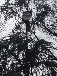 The protester perched in the tree on the National Mall. (Photo: Hunter Walker)