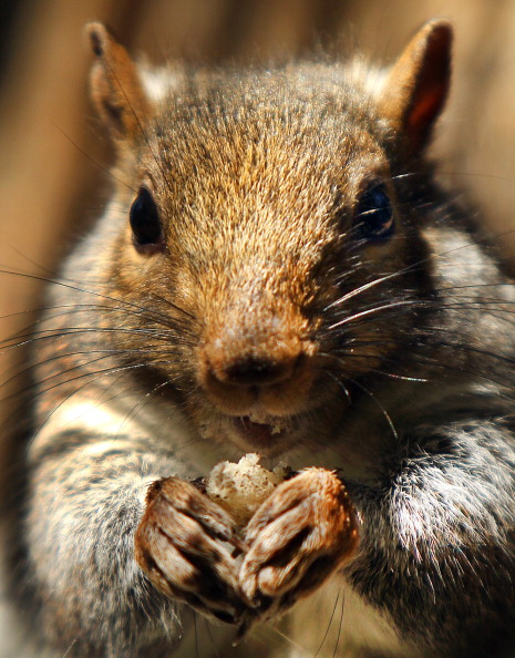 Juan Ayala, 35, was arrested in Williamsburg on Sunday afternoon after attempting to steal three 25 lb. boxes of almonds. Photo by Getty Images.