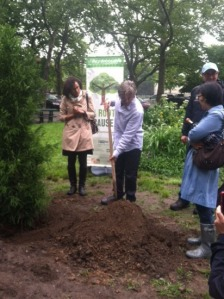 Mr. Rivera, members of the NYC Parks Department and residents breaking the soil for the new tree. (Kelly Gifford