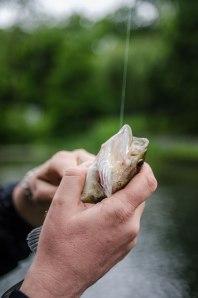 Largemouth bass. (Photo: Fernando Gomes)