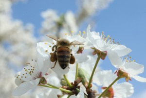 Bee (Getty Images).