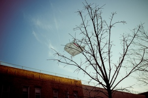 Plastic bag stuck in a tree with no birds (Flickr).