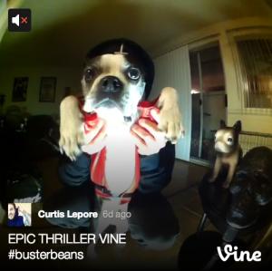 Cool #dog Vine.