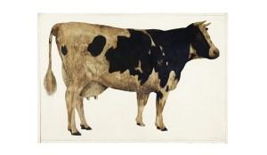 'Cow,' 1963. (Photo by Jason Dewey/New Museum)