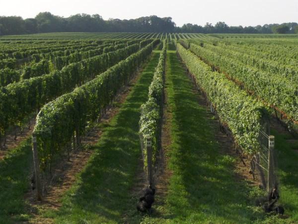 winery - joe shlabotnik