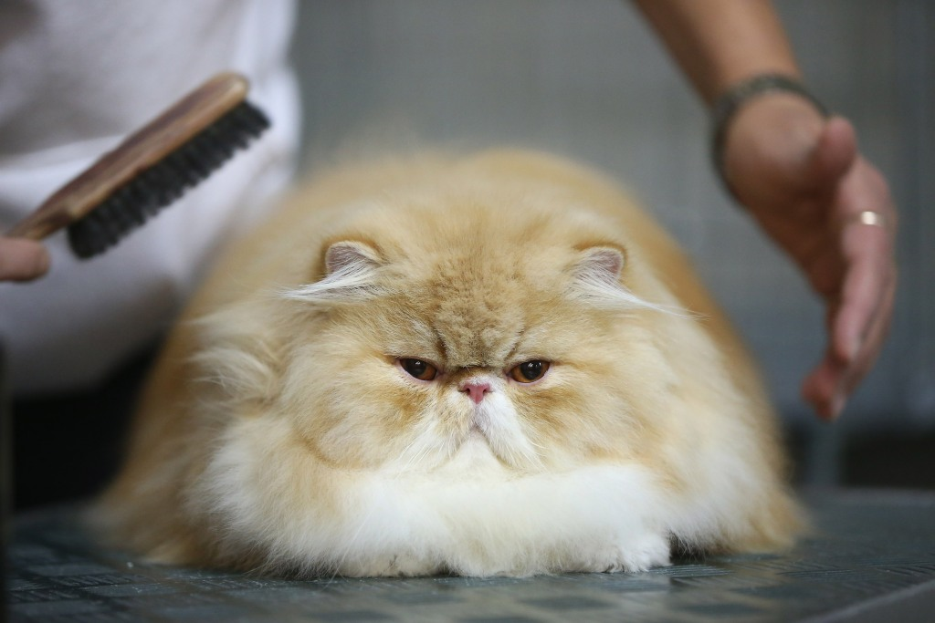 This Persian's bitchface is everything. (Photo by Sean Gallup/Getty Images)