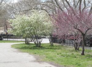 McCarren Park. (NYC Gov Parks website)