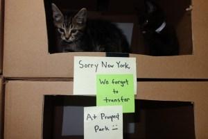 The kittens. (Photo: ScratchingPad.Tumblr.com)