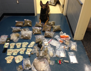 An NYPD mushroom seizure. Your dorm should not look like this. (Photo: Getty).