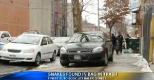 Brooklyn Dumpster Snakes (YouTube)