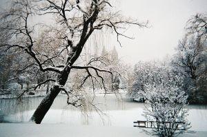 Central Park. (Photo via Wikimedia Commons)