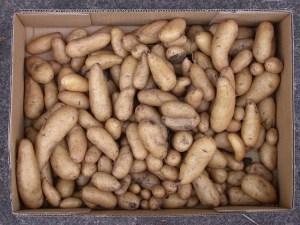 Many potatoes. (Photo by graibeard/Flickr)