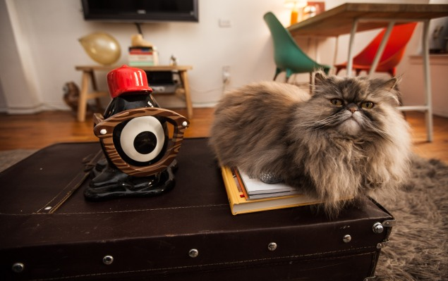 The Persian cat, Pinot Grigio. (Photo by Emily Assiran)