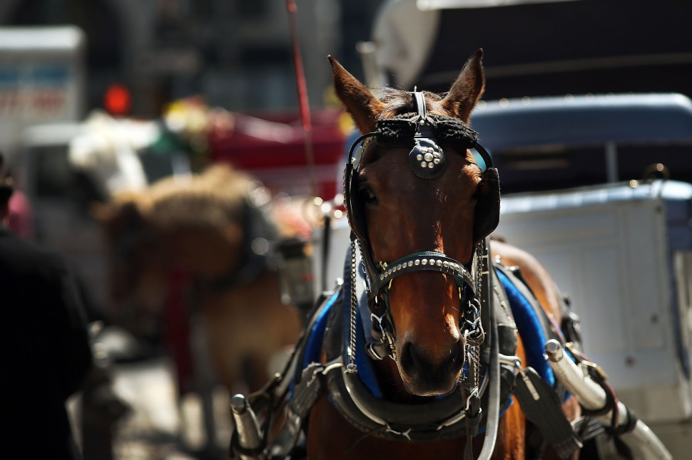 NYC Mayor De Blasio Facing Stiff Opposition To Proposed Horse Carriage Ban
