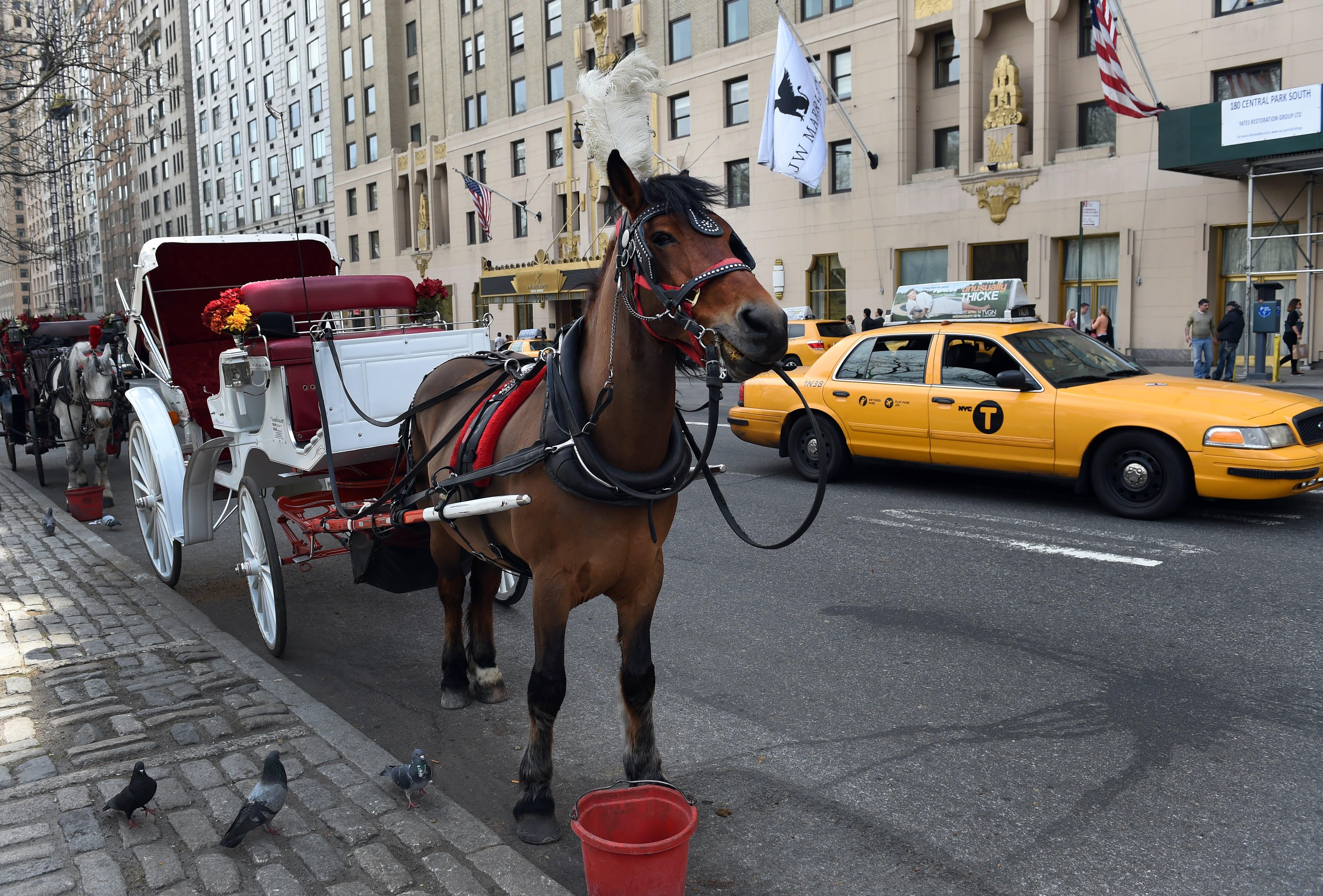 US-HORSES