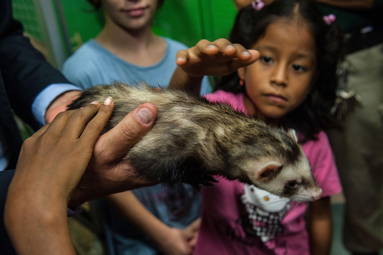 A ferret. (Photo: Giorgio Cosulich/Getty Images)