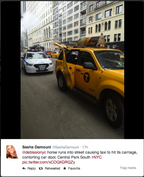 Pony slams into cab door