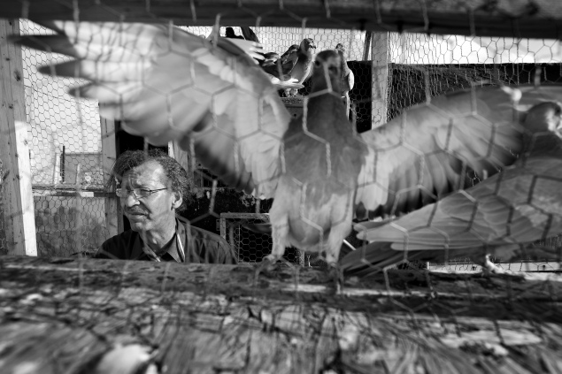 Howard with his homing pigeons. Brooklyn, New York