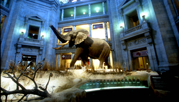 The Smithsonian's Museum of Natural History. (photo via the Smithsonian)
