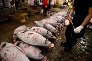 A haul of bluefin tuna (Stewart Butterfield, Flickr)