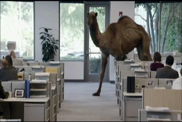That fucking camel.