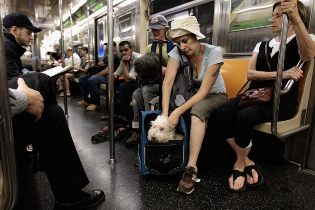 Humans and pets aren't the only ones along for the ride.  (Photo by Chip Somodevilla/Getty Images)