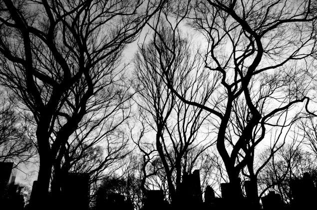 Central Park. (Moon Lee/flickr)