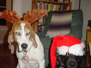 Hound and Shadow posing for their only Christmas card. (Annmarie Kelly-Harbaugh)