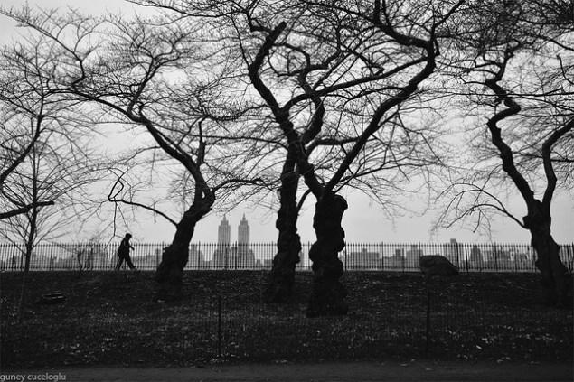 Guney Cuceloglu/flickr.
