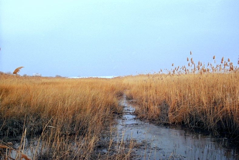 Meadowlands_Lyndhurst