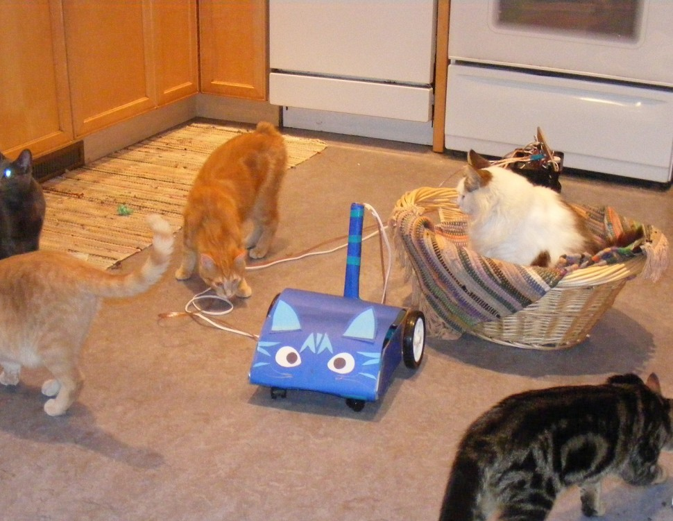 Helena Jacoba, Creating the catbot - cat robot with cat assist