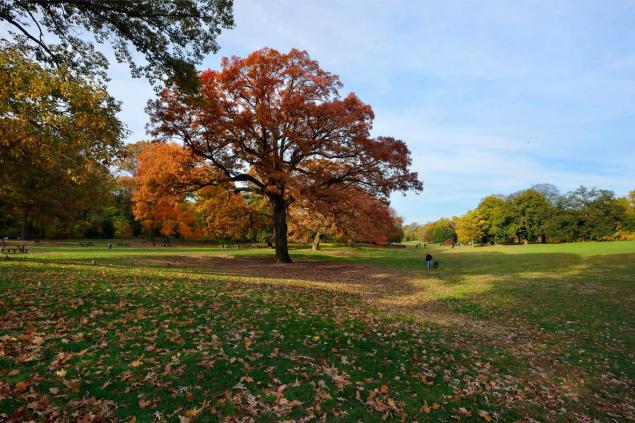 Prospect Park in Brooklyn. (Photo: Facebook/Prospect Park)