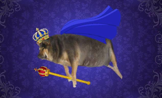 """Many of the memes praise the pup. Comments on this one read along the lines on """"Long live the super chubby king!"""" (Photo: Facebook)"""
