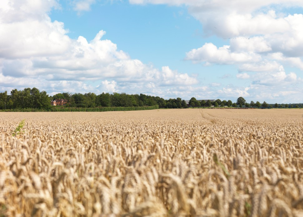 Råbelöf Estate wheat fields (Photo: Absolut Elyx).
