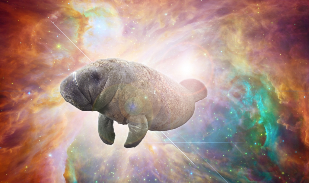 I may not be able to prove that the world was created by a giant cosmic manatee. But then again, can you prove that it wasn't?