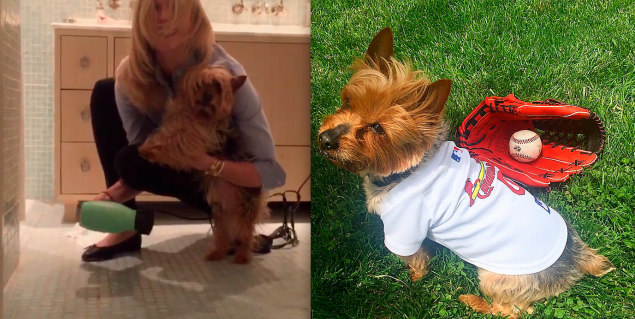 A screen grab of the super cute video. Plus, the pup dressed up for baseball. (Photos: Instagram)