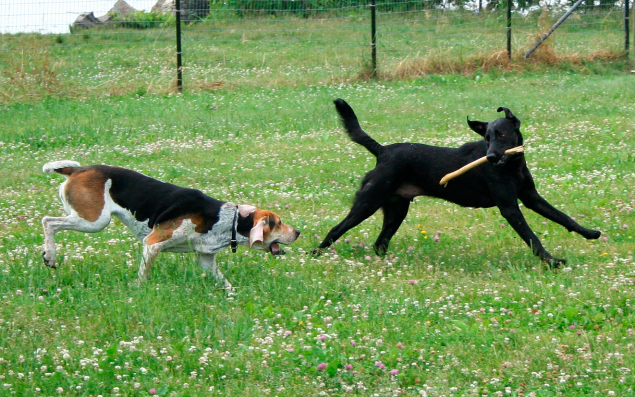 Tindog—like Tinder, but for dogs—promises to find playmates for dogs and their humans. Photo: Wikimedia Commons)
