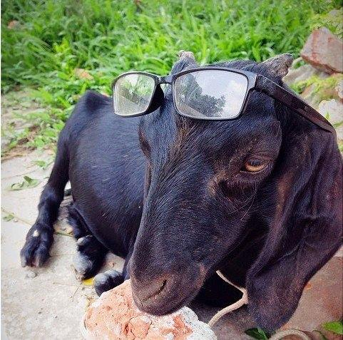 """People these days walk into their friends homes asking for the wi-fi password. I walk in and ask for some good Edgar Allan Poe."" (Photo: Facebook/Goats of Bangladesh)"