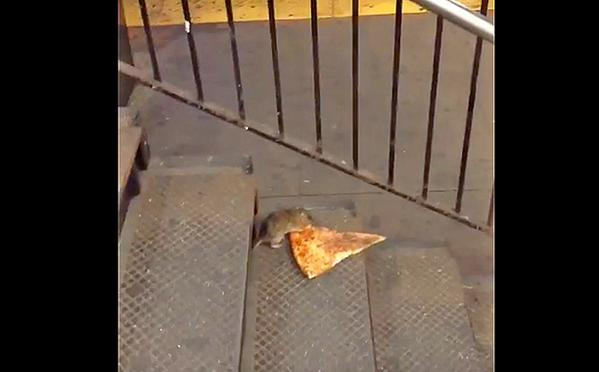 Pizza Rat is captivating the Internet for the second straight day thanks to its Twitter account. (Photo: Twitter)