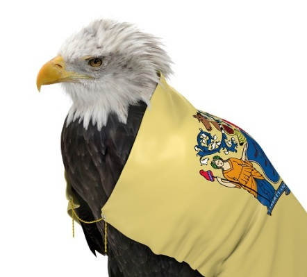 American bald eagle wearing the New Jersey state flag