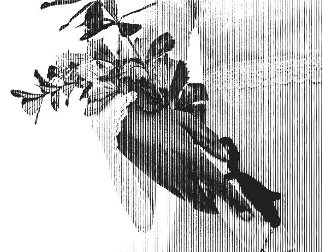 7. Catalina Half Wedding Flowers