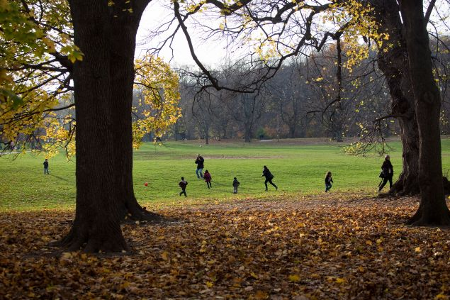 Three years after Sandy, Prospect Park is still re-planting trees (Photo by Michael Nagle/Getty Images).