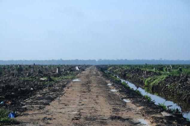 Deforestation in Indonesia (Wikimedia)
