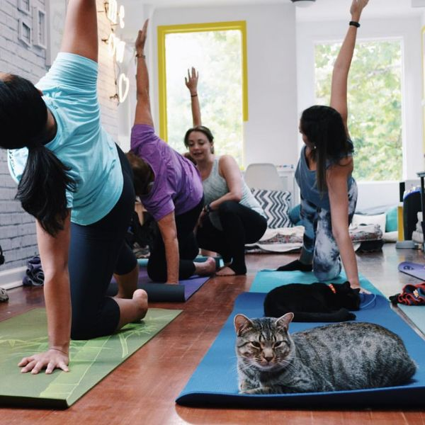 The cat isn't quite sure about downward dog (Photo: Crumbs & Whiskers).