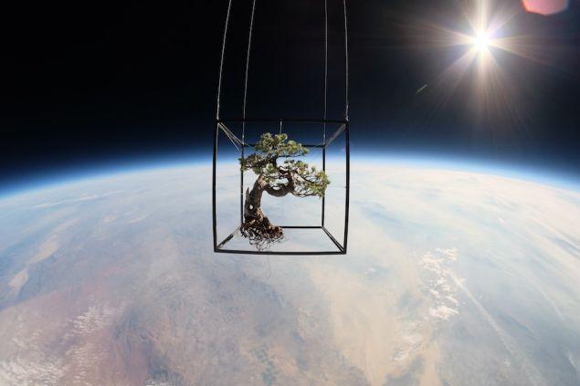 Botanical Space Flight, July 15, 2014, by Azuma Makoto