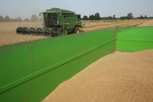 Freshly-harvested grains lie in a tractor's trailer on a farm (Photo: Sean Gallup/Getty Images).