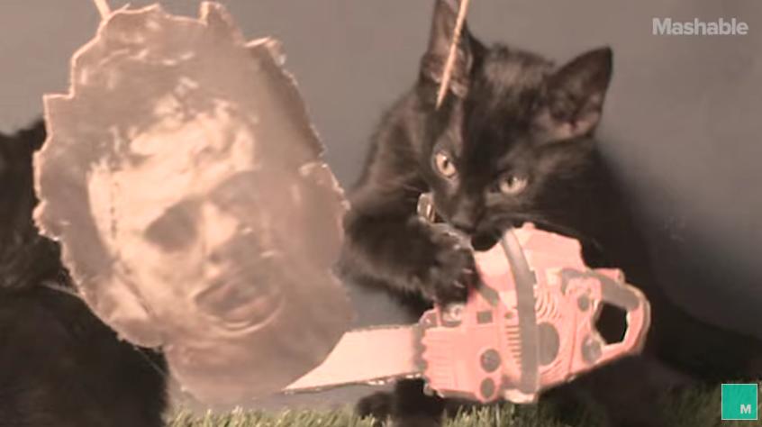 The Texas Chainspaw Meowsacre. (Screengrab: YouTube)