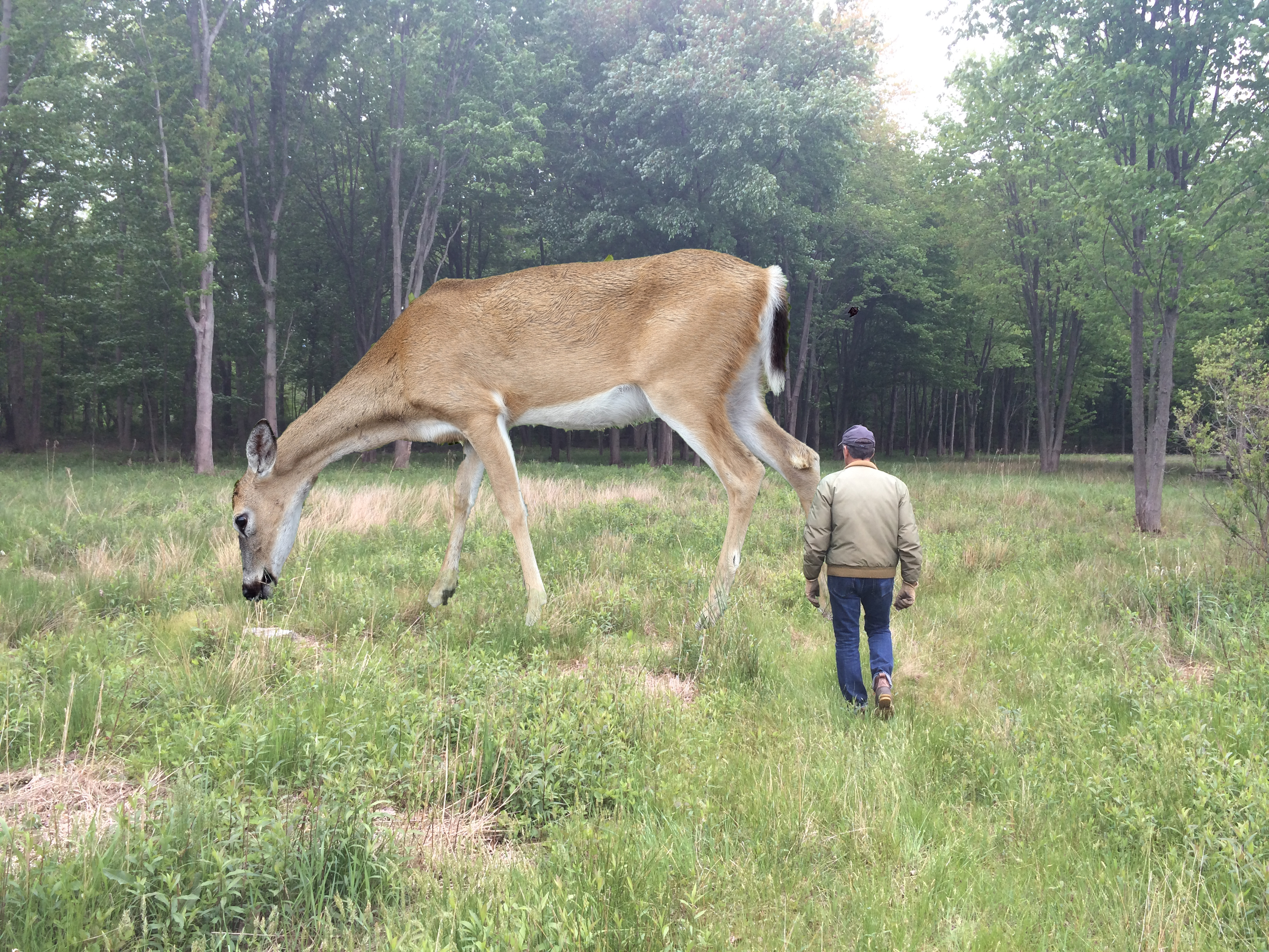 Tony Tasset, Deer, 2015.